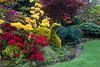"""Swan"" topiary - Taxus baccata 'Semperaurea' (Four Seasons Garden) Tags: uk england yellow marie garden four gold golden spring topiary seasons tony yew newton taxus walsall baccata fourseasonsgarden semperaurea"