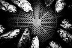 ((Jt)) Tags: fish blog essay asia sony flash streetphotography korea thoughts seoul fishmarket travelphotography namdaemunmarket compactcameras jtinseoul
