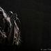 Layla Zoehttp://www.tjgardner-photo.de/Tony Joe Gardner Photography