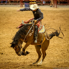 20140628 5DIII Davie Rodeo 53 (James Scott S) Tags: light horses canon scott james florida action brother no flash low barrel s bull racing riding pro rodeo fl southeast calf davie bros 70200 ef broncs bucking roping weekley 5diii