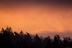 Through the Fog (zreyn) Tags: rainier zreyn