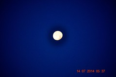 2014 July 14 Setting Moon (King Kong 911) Tags: flowers blue sky brown moon rabbit birds yale setting heavensgate