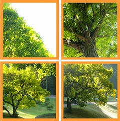 Du Wundergott, du Herr der Zeiten (amras_de) Tags: tree tr boom arbor rbol albero tre puu arbre rvore strom baum arbo fa trd tr koks drvo drzewo medis arbore aga stablo zuhaitz crann drevo rvulu