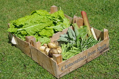 From our vegetable plot (Blue sky and countryside.) Tags: new vegetables potatoes beans sage rosemary organic rhubarb homegrown spinach pentland javelin haricotfrench