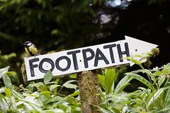 Great tit (John Parfrey) Tags: england bird sign tit unitedkingdom lakedistrict footpath keswick greattit 2014 portinscale
