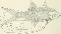 Anglų lietuvių žodynas. Žodis family centriscidae reiškia šeimos centriscidae lietuviškai.