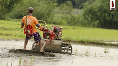 Halang/Linang 02 (Soil Cultivation) (ilusyonimages) Tags: street tractor asian photography asia farm philippines farming images illusion filipino farmer ricefields handtractor ilusyon