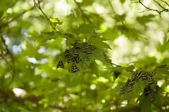butterfly valley (vidum) Tags: butterfly des greece valley rodos rhodes grce grece vlinder papillons valle griekenland vallee vallei vlindervallei vidum
