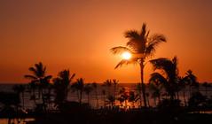 Palm Burst.jpg (Darren Berg) Tags: sunset sky orange hawaii palm