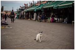 I own these Streets (keety uk) Tags: ©stuartbennett photokeetynet morroco desert marrakech berber