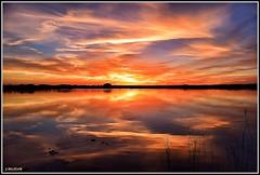 De vuelta a la laguna. (Jose Roldan Garcia) Tags: luz libertad libre laguna colores cielo espejo reflejos nubes naturaleza natural atardecer aire agua fantasia belleza villafranca toledo españa mancha