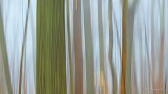 The world through my eyes.. (Earl Reinink) Tags: earl reinink earlreinink niagara ontario canada nikon nature naturephotography woods spring abstract adhdzdedra motion