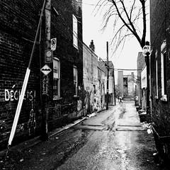 La pluie a lavé la ruelle... (woltarise) Tags: ruelle outremont montréal pluie passant parapluie streetwise