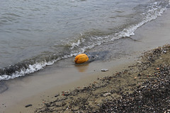 Pumpkin on the shore of Lake Ohrid, Pogradec (Timon91) Tags: albania albanië shqipëria shqipëri ohrid lake meer охридско езеро ohridsko ezero liqeni ohrit