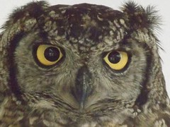 ~ Sut mae ich i , Dude ! ~ (A4ANGHARAD) Tags: eisteddfo2013 macevans wales cymru owlrescue a4angharad sl240 fuji magicalmoments llangollen