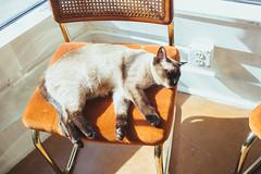 IMG_8185 (ahcordes) Tags: grand rapids art studio gallery cerasus pottery print design cat artist portrait vscofilm canon