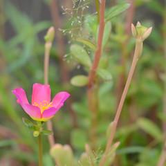 DSC_0545 (Kelson Souza) Tags: flor flores flower jardim jardinagem