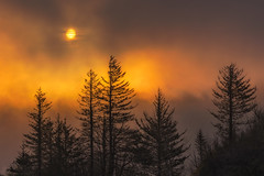 Veiled Sunrise (Hilton Chen) Tags: sun spring sunrise thickfog orangelight lowlyingclouds diffusedlight trees columbiarivergorge silhouette corbett oregon unitedstates us