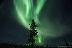 IMG_2548 (F@bione©) Tags: lapponia lapland marzo 2017 husky aurora boreale northenlight circolo polare artico rovagnemi finalndia finland