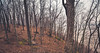 Through the Woods (Tony Webster) Tags: frontenac frontenacstatepark lakepepin minnesota mississippiriver earlyspring forest leaves spring statepark trees unitedstates us