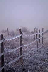 apr21 2017 19 (Delena Jane) Tags: delenajane macro 100mm freezingrain iced pentaxart canada conceptionbaysouth fence newfoundland ngc