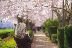 Capturing Beauty (Ian Sane) Tags: ian sane images capturingbeauty woman smartphone camera cherry blossom trees salem oregon state capitol mall candid street photography bokeh blur canon eos 5d mark ii two ef70200mm f28l is usm lens