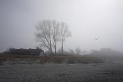 Kontrastprogramm an der Ostsee (Christian Jena) Tags: ahrenshoop märz 2017 nebel strand ostsee zum windflüchter buhne 12