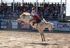 P3110146 (David W. Burrows) Tags: cowboys cowgirls horses cattle bullriding saddlebronc cowboy boots ranch florida ranching children girls boys hats clown bullfighters bullfighting