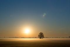 Sunrise and fog... (CarolienCadoni..) Tags: sonyslta99 sal2470z fog foggy mist misty mistymorning morningfrost spring sky blue tree silhouette earlymorning earth nieuwbuinen drenthe nederland netherlands