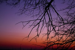 Evening sunset and branches (danielkubarev) Tags: fiery sunset tress branches sky beauty