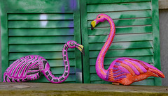 Wild Flamingoes (BKHagar *Kim*) Tags: bkhagar flamingo flamingoes plastic bird birds markers paint art color pink orange project shutters green