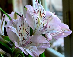 Table Flowers (pjpink) Tags: pomme restaurant lunch gordonsville virginia february 2017 winter pjpink flower
