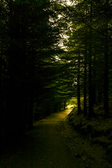 The Target (A Costigan) Tags: cronewoods wicklow ireland woods woodland forest path camhino light