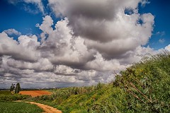 The smell of summer (Ivona & Eli) Tags: clouds fields plants flowers trees sharon sky israel middle east cloudy sun