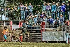 Cowboy Cheer Squad