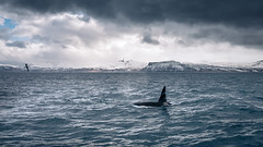 The Orca - Olafsvik, Iceland - Travel photography (Giuseppe Milo (www.pixael.com)) Tags: orch wildlife seascape olafsvik nature outdoor iceland sky animals glacier sea clouds ice ólafsvík is onsale