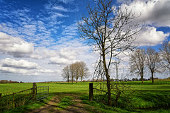 Pastoral 2 (Alfred Grupstra) Tags: sky clouds fence landscape light pastoral pasture shadows trees oostwoud noordholland nederland nl ruralscene tree field blue grass scenics springtime meadow