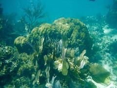 Version 2 (bermudafan8) Tags: 2017 spring break bermudafan8 mexico snorkeling water caribbean snorkel ocean blue