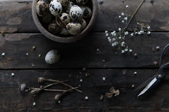 (esmeecadoni) Tags: europe netherlands beautifulearth sony indoor simple simplicity minimal minimalistic light littlethings photography holland morning bokeh flower drenthe dried fadedglory nature quail eggs stilllife flatlay