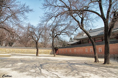 Trees - Gyeongbokgung Palace, South Korea (cattan2011) Tags: gyeongbokgungpalace southkorea travelbloggers traveltuesday travelphotography travel streetpicture streetphoto streetphotography streetart street natureperfection naturephotography nature landscapephotography landscape shadows trees