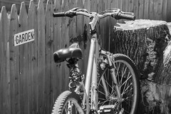 Happy World Bicycle Day! (explored 4/19/17) (Marcy Leigh) Tags: bike bicycle garden fence outdoor outdoors wheels tires handlebars seat spokes pedal worldbicycleday 117picturesin2017