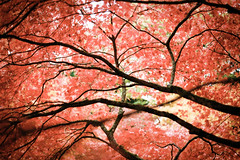 Westonbirt Arboretum (Gianpaolo Fusari) Tags: autumn england nature gloucestershire 2016 fall film trees analogue westcountry unitedkingdom arboretum nikonf3 nikon 35mm nikonseriese50mmf18 cotswolds westonbirt kodakportra400 kodak gb