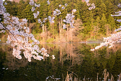 IMGP1180.jpg (Naoki Natsume/Ishii , 夏目直樹 ,石井直樹) Tags: sakura naokiishii lenz sigma fukushima flower camera japan pentax location human sigma1020mmf35exdchsm pentaxk3