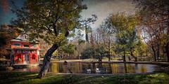 (228/17) La Casita del Pescador (Pablo Arias) Tags: pabloarias photoshop photomatix nxd españa cielo nubes arquitectura parque patos aves estanque agua árboles retiro madrid comunidaddemadrid