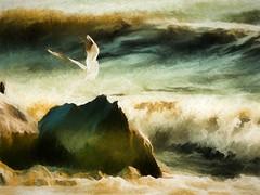 Goélan dans la tempête (Yves Crausaz) Tags: oiseaux animaux lausanne vaud suisse ch