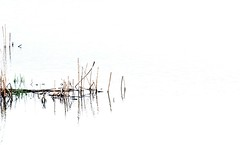Reed and Grass and Water (russell.tomlin) Tags: reeds grasses eveninglight fernridge springphotography wetlandsphotography