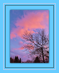 Eye To The Sky (bigbrowneyez) Tags: pink blue trees sunset sky nature beautiful silhouette alberi clouds tramonto nuvole gorgeous branches details natura frame colori cornice bello bellissimo myfrontgarden eyetothesky