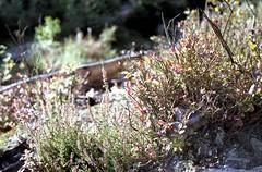 Bayehon (Spotmatix) Tags: camera flowers film nature canon landscape countryside belgium iso400 places lige lige nonamec41