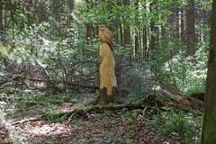 Geschnitzte Eule (picturebuilder) Tags: sculpture carved forrest owl eule rauischholzhausen geschnitzt