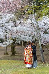 Nara (Ocelyn) Tags: voyage travel flower tourism japan canon cherry spring kyoto asia blossom sakura asie nara fr 2014